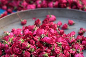Indian rose: helps balance aggarvated pitta, helps tighten and shrink open pores and imporve skin texture in Krya Classic face wash